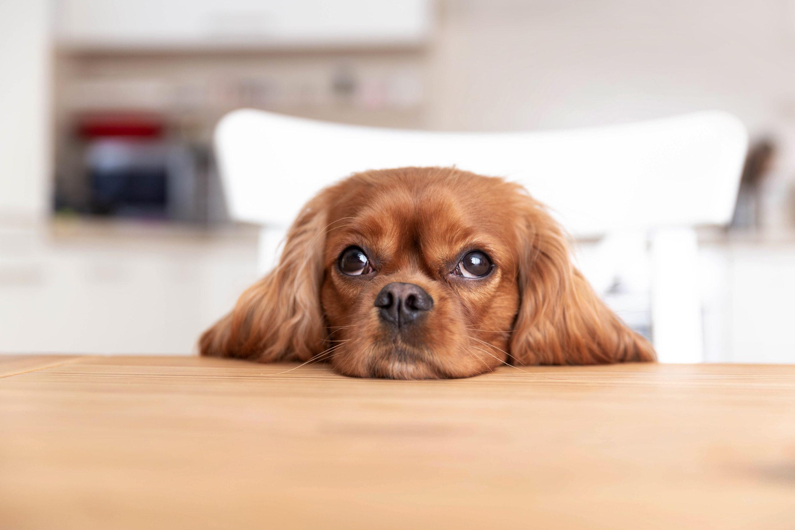 Qual é o valor da cremação de um cachorro?