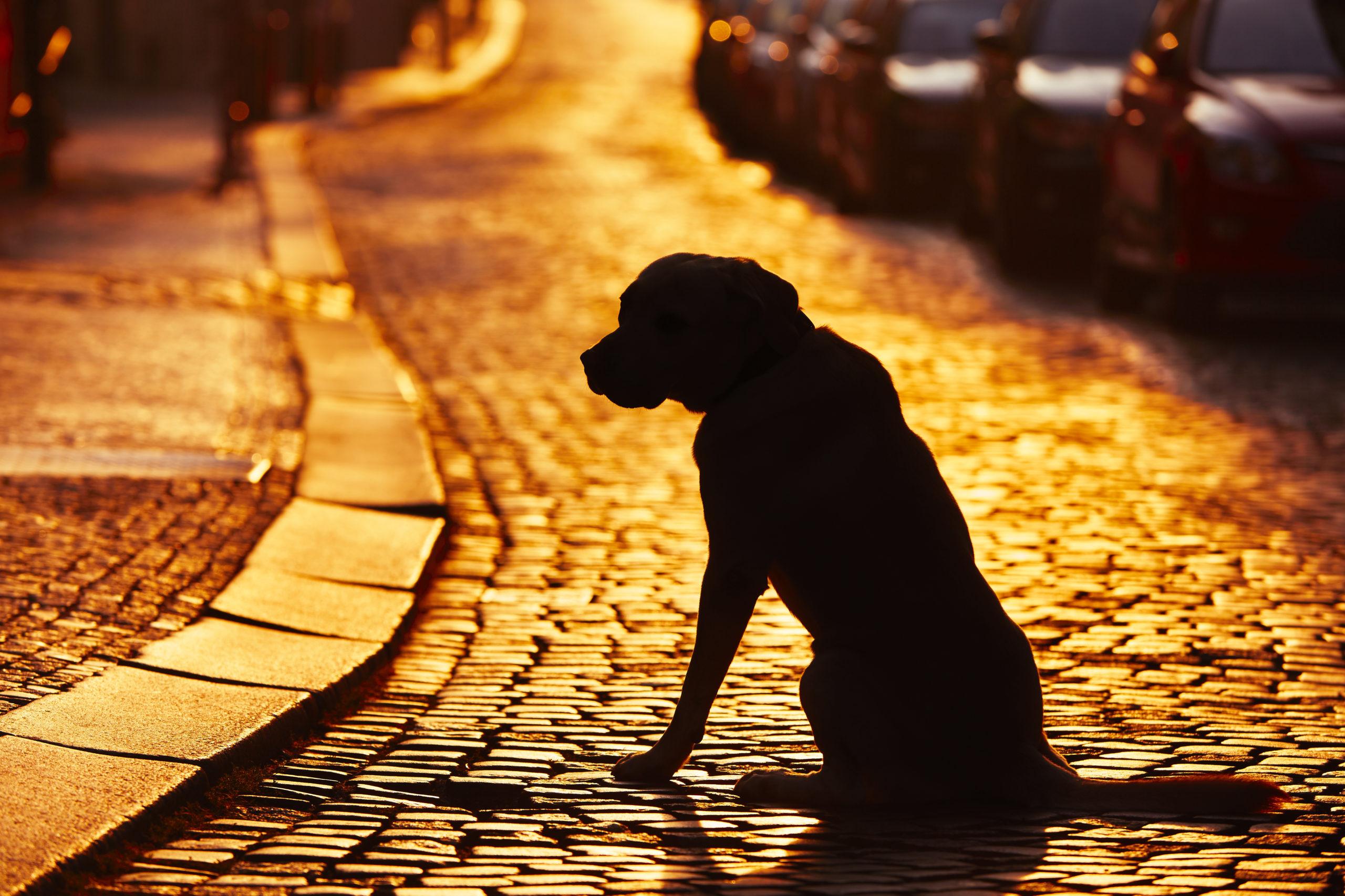 20 milhões de cães são abandonados no Brasil